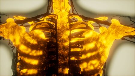 human skeleton bones scan glowing