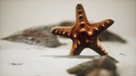 red starfish on ocean beach with golden sand Banque d'images