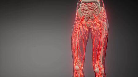 science anatomy scan of human blood vessels Archivio Fotografico