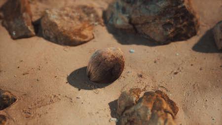 brown coconut on the beach sand Stok Fotoğraf