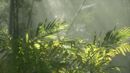 bright light shining through the humid misty fog and jungle leaves, lush green tropical forest