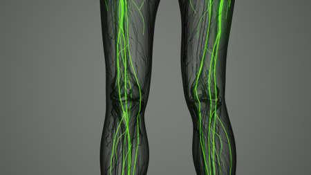 brain and nervous system of human 免版税图像