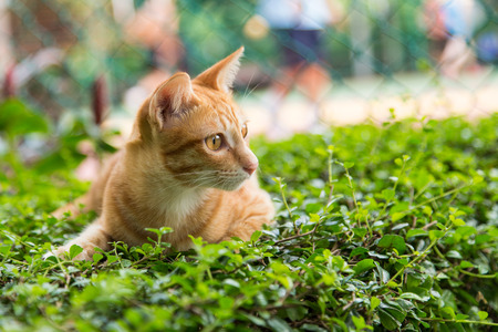A yellow cat on green grass photo