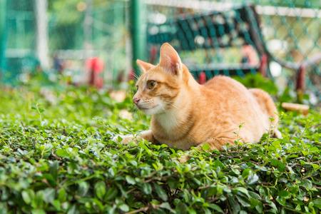 Yellow cat on green grass photo