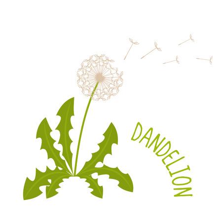Dandelion vector illustration isolated on white background