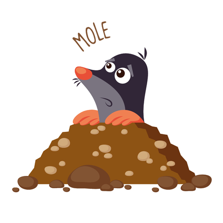Mole vector illustration isolated on white background