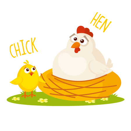 Chick and Hen Vector illustration isolated on white background