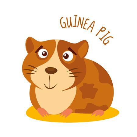 Guinea pig Vector illustration isolated on white background