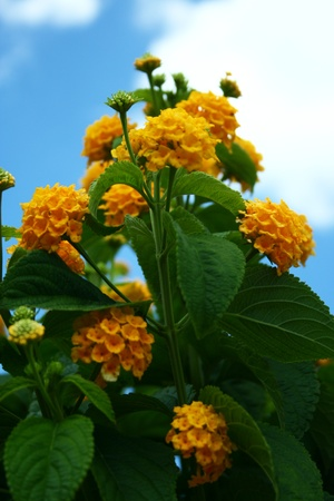 Yellow bloom flowers