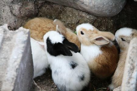 warren: Warren and little cute rabbits Stock Photo