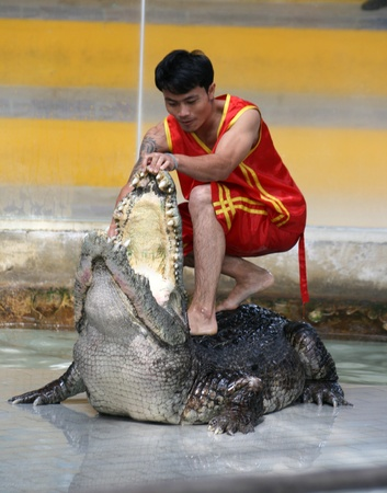 CHONBURI, THAILAND – DECEMBER 4: A man performs crocodile show by opening its mouth
