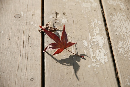 imply: A red leaf on the wooden floor Stock Photo