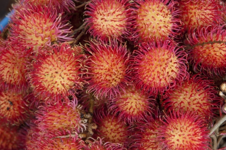 Rambutan Stock Photo - 14154447