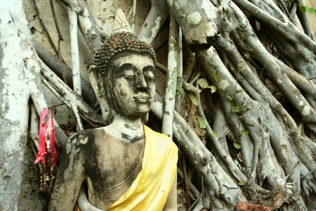 A Buddha statue with wooden root on ancient wall, Ayuthaya Thailand Stock Photo - 15627257