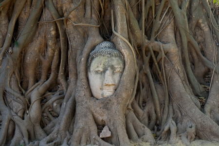 The head of Sandstone Buddha in Tree Roots at Wat Mahathat, Ayutthaya, Thailand.
