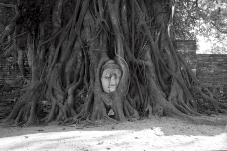 The head of Sandstone Buddha in Tree Roots at Wat Mahathat, Ayutthaya, Thailand.  photo