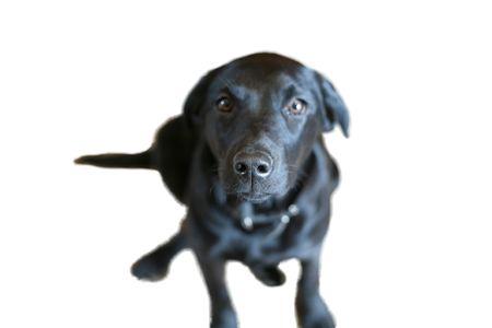 nosey: Nosey Dog