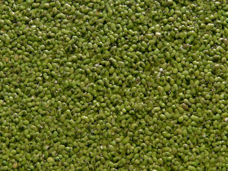 Series of the textures (Blue-green algae)