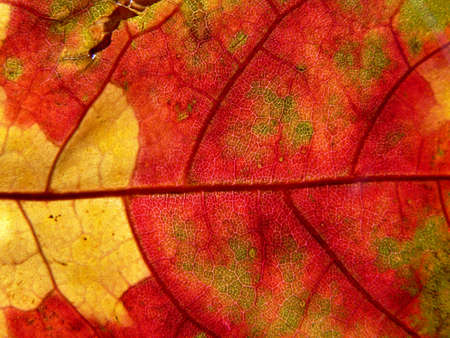 Series of the textures (red and yellow leaf)