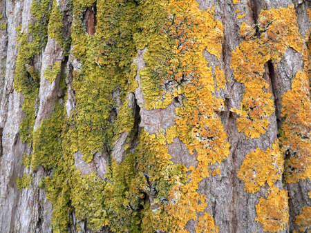 Series of the texture (bark with lichen) Stock Photo - 708465