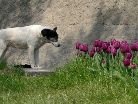 Dog and flowerbed photo