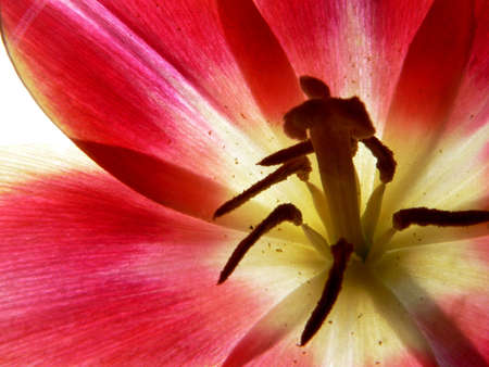 Series of the texture (Flower of the amaryllis, close-up 3)