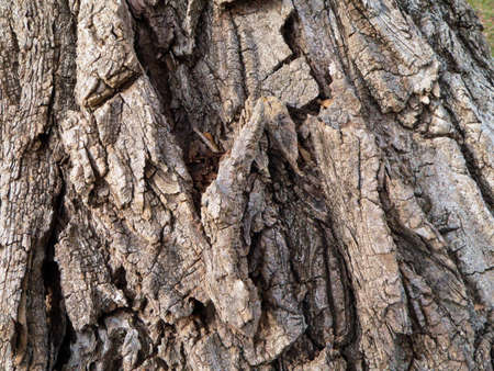 Series of the natural textures (Oaken rind)
