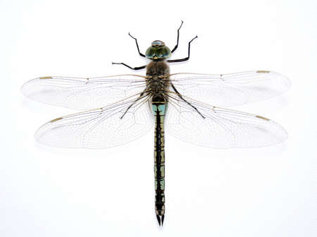 damsels: Dragonfly on the gray background 2