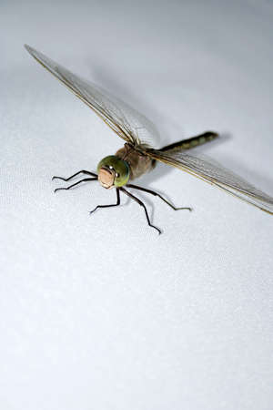 damsels: Green dragonfly on gray background. Close-up view. 2 Stock Photo