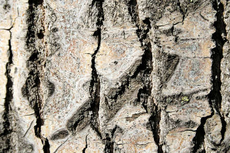 Series of the textures (bark of the tree) Stock Photo - 1148159