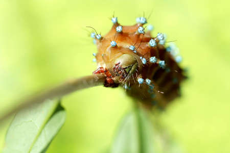 crawly: Caterpillar on branch of the tree. Stock Photo