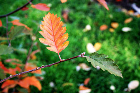 start: Orange Blatt, beginnen im Herbst