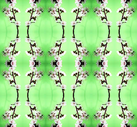 Series of the seamless natural patterns (blossom cherry-tree) Stock Photo - 2853831