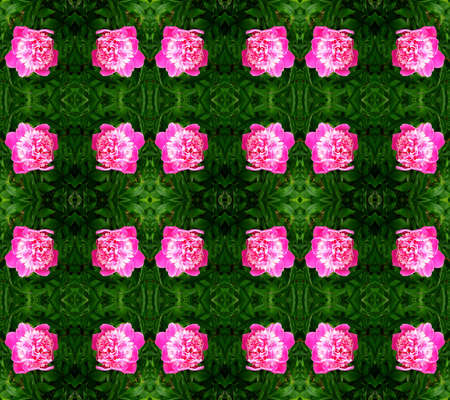 Series of the seamless natural patterns (chrysanthemums) Stock Photo - 2867579