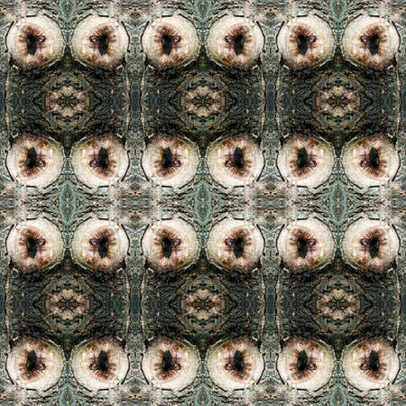 bough: Series of the seamless natural patterns (Bark of tree) Stock Photo