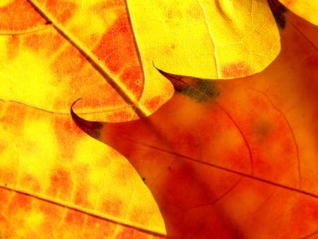 season photos: Orange and red leaves in the Autumn