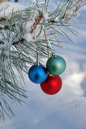 pine three: Three colour balls on a pine branch on the snow background (vertical)
