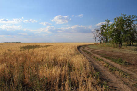 sloping: dirt path along the sloping field Stock Photo