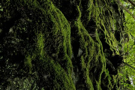 a vertical rock with moss