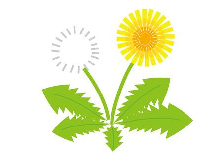 Dandelion in white background Stock Illustratie