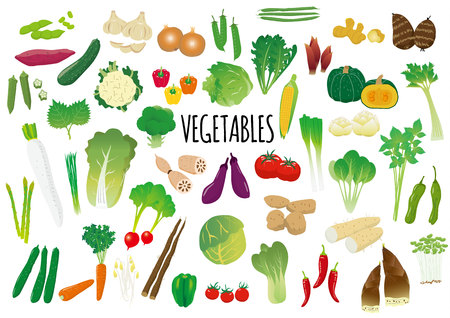 Illustrated set of vegetables