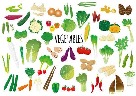 Ensemble illustré de légumes