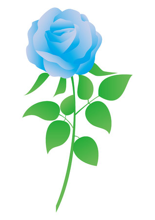 This is a vector illustration of blue rose. 일러스트
