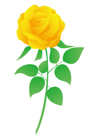 This is a vector illustration of yellow rose.