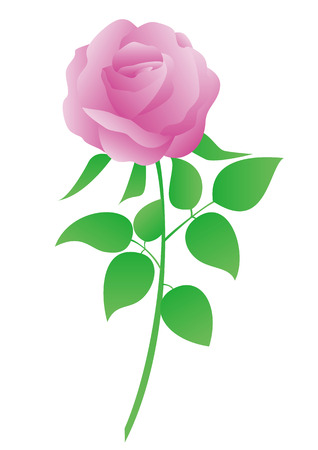 This is a vector illustration of pink rose.
