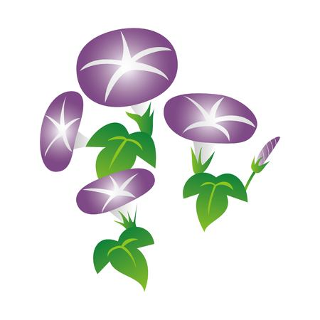 Morning glory illustration (violet, summer flower, floral)