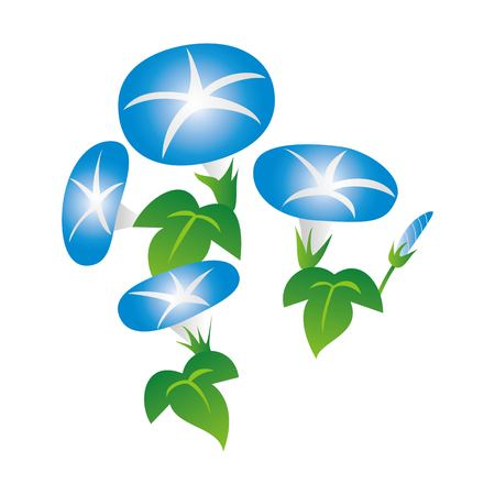 Morning glory illustration (blue, summer flower, floral)