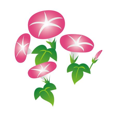 Morning glory illustration (pink, summer flower, floral) 일러스트