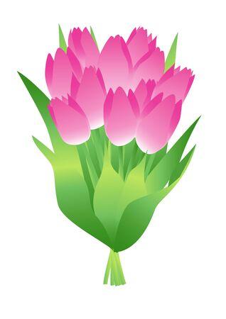 Illustration of a bouquet of tulips Illusztráció