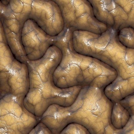 flesh: Wrinkled brain